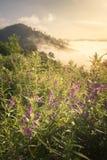 Λουλούδι και ομίχλη το πρωί Στοκ εικόνες με δικαίωμα ελεύθερης χρήσης