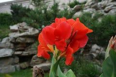 Λουλούδι και πέτρα Στοκ εικόνες με δικαίωμα ελεύθερης χρήσης