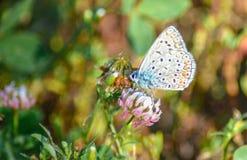 Λουλούδι και πεταλούδα Στοκ Εικόνα