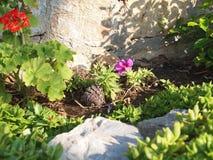 Λουλούδι και πράσινα φύλλα κοντά στον τοίχο πετρών Στοκ Εικόνες