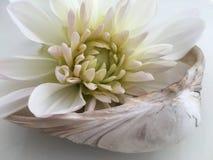 Λουλούδι και το θαλασσινό κοχύλι - Στοκ φωτογραφία με δικαίωμα ελεύθερης χρήσης