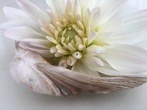 Λουλούδι και το θαλασσινό κοχύλι - Στοκ Εικόνες