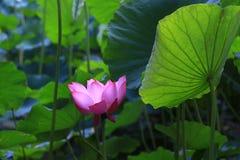 Λουλούδι και φύλλο Στοκ Εικόνες