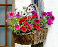 λουλούδι καλαθιών Στοκ Εικόνες