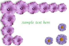 λουλούδι καρτών Στοκ Εικόνα