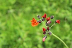 Λουλούδι, κατάπληξη, φύση, καρδιά, ψυχή στοκ εικόνα