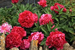 Λουλούδι, κατάπληξη, φύση, καρδιά, ψυχή στοκ εικόνες