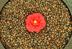 λουλούδι καφέ στοκ εικόνα με δικαίωμα ελεύθερης χρήσης