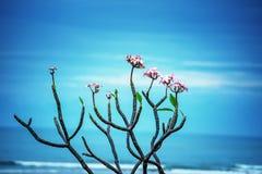 Λουλούδι, κεφάλι λουλουδιών, πέταλο, ορχιδέα, φρεσκάδα, φύλλο, ομορφιά στη φύση, κινηματογράφηση σε πρώτο πλάνο, βοτανική, άνθος, στοκ φωτογραφία με δικαίωμα ελεύθερης χρήσης