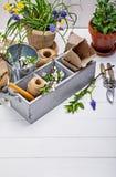 Λουλούδι κηπουρικής και άνοιξη ανθοκομίας με τον κήπο Στοκ Φωτογραφίες