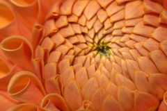 λουλούδι κινηματογραφήσεων σε πρώτο πλάνο στοκ φωτογραφίες με δικαίωμα ελεύθερης χρήσης