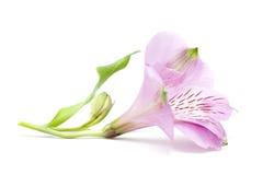 λουλούδι κινηματογραφή Στοκ φωτογραφία με δικαίωμα ελεύθερης χρήσης