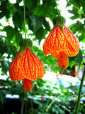 λουλούδι κουδουνιών μ&i Στοκ φωτογραφίες με δικαίωμα ελεύθερης χρήσης