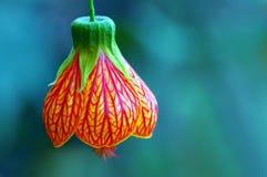 λουλούδι κουδουνιών Στοκ εικόνα με δικαίωμα ελεύθερης χρήσης