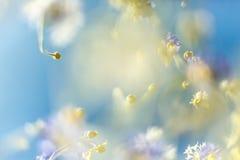 Λουλούδι κόσμου και ο ουρανός Στοκ Εικόνες