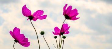Λουλούδι κόσμου Στοκ Φωτογραφία