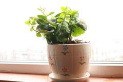 Λουλούδι μακροζωίας στοκ φωτογραφία με δικαίωμα ελεύθερης χρήσης