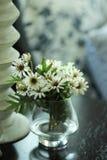 λουλούδι μαργαριτών Στοκ φωτογραφία με δικαίωμα ελεύθερης χρήσης