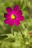 λουλούδι μελισσών Στοκ εικόνες με δικαίωμα ελεύθερης χρήσης