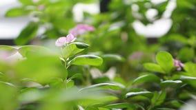 Λουλούδι μεταξύ άλλων Στοκ εικόνες με δικαίωμα ελεύθερης χρήσης