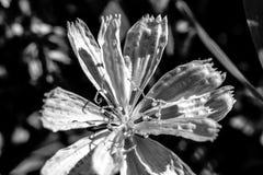 Λουλούδι με γραπτό, μακρο και λεπτομέρειες της αφηρημένης φύσης Στοκ φωτογραφία με δικαίωμα ελεύθερης χρήσης