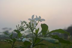 Λουλούδι με το υπόβαθρο ουρανού στο πρωί στοκ εικόνες