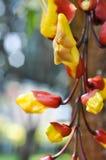 Λουλούδι με το bokeh Στοκ Εικόνες