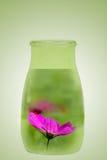 λουλούδι μπουκαλιών στοκ φωτογραφίες με δικαίωμα ελεύθερης χρήσης