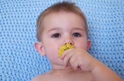 λουλούδι μωρών Στοκ Φωτογραφίες