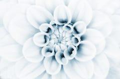 λουλούδι νταλιών κινημα&ta Στοκ εικόνα με δικαίωμα ελεύθερης χρήσης
