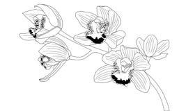Λουλούδι ορχιδεών, γραπτή απεικόνιση στοκ φωτογραφίες