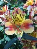 Λουλούδι ορχιδεών σε ένας από τους κήπους στη Σιγκαπούρη στοκ εικόνα