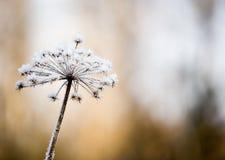 λουλούδι παγωμένο στοκ εικόνα με δικαίωμα ελεύθερης χρήσης