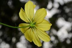 Λουλούδι παπουτσιών Στοκ Εικόνα
