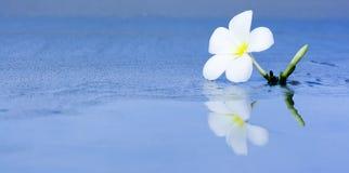 λουλούδι παραλιών τροπικό Στοκ εικόνα με δικαίωμα ελεύθερης χρήσης