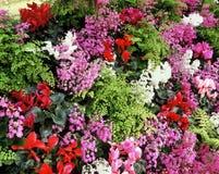 λουλούδι παρουσίασης Στοκ Εικόνα
