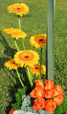 λουλούδι παρόν στοκ εικόνα με δικαίωμα ελεύθερης χρήσης