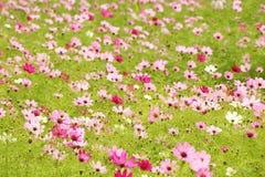 λουλούδι πεδίων κόσμου Στοκ Φωτογραφία