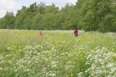 λουλούδι πεδίων Στοκ εικόνα με δικαίωμα ελεύθερης χρήσης