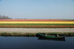 λουλούδι πεδίων Στοκ Φωτογραφίες