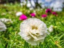 Λουλούδι πετάλων αγγέλου στοκ φωτογραφίες