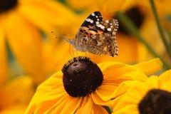 λουλούδι πεταλούδων κί&t στοκ φωτογραφία