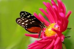 λουλούδι πεταλούδων Στοκ φωτογραφίες με δικαίωμα ελεύθερης χρήσης