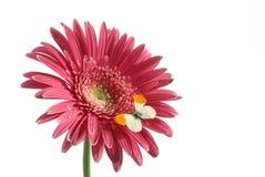 λουλούδι πεταλούδων στοκ φωτογραφία με δικαίωμα ελεύθερης χρήσης