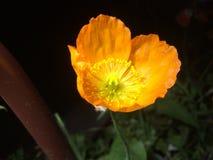 Λουλούδι που λαμβάνεται πρόσφατα στοκ φωτογραφία με δικαίωμα ελεύθερης χρήσης