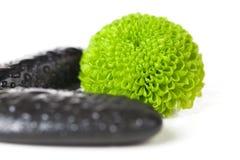 λουλούδι πράσινο Στοκ εικόνες με δικαίωμα ελεύθερης χρήσης