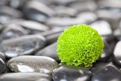 λουλούδι πράσινο Στοκ φωτογραφίες με δικαίωμα ελεύθερης χρήσης