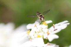 λουλούδι προγραμματισ&t Στοκ εικόνες με δικαίωμα ελεύθερης χρήσης