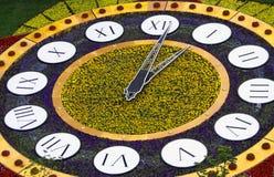 λουλούδι ρολογιών Στοκ Εικόνες