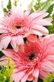 λουλούδι ρύθμισης Στοκ Εικόνα